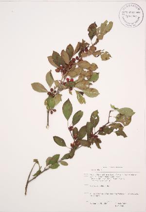 ( - JAG 0189)  @11 [ ] Copyright (2009) Steven Newmaster University of Guelph BIO Herbarium