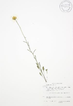 ( - BAR174)  @11 [ ] Copyright (2009) Steven Newmaster University of Guelph BIO Herbarium