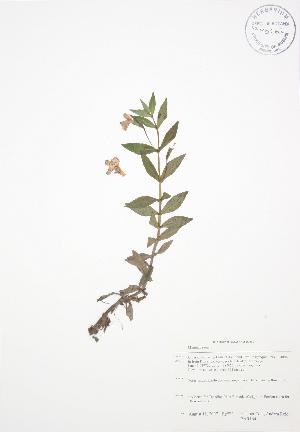 ( - BAR164)  @11 [ ] Copyright (2009) Steven Newmaster University of Guelph BIO Herbarium