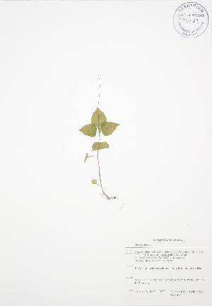 ( - BAR163)  @11 [ ] Copyright (2009) Steven Newmaster University of Guelph BIO Herbarium
