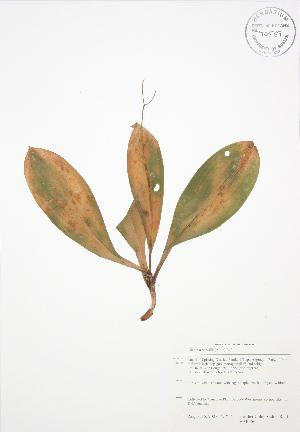 ( - BAR156)  @11 [ ] Copyright (2009) Steven Newmaster University of Guelph BIO Herbarium