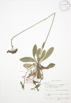 ( - BAR134)  @11 [ ] Copyright (2009) Unspecified University of Guelph BIO Herbarium