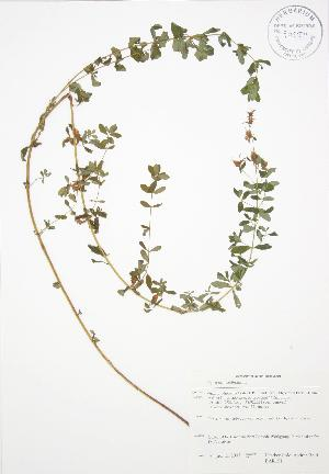 ( - BAR151)  @11 [ ] Copyright (2009) Steven Newmaster University of Guelph BIO Herbarium