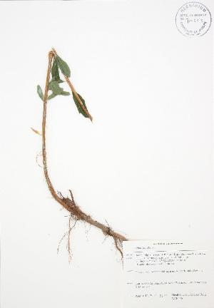 ( - BAR178)  @11 [ ] Copyright (2009) Unspecified University of Guelph BIO Herbarium