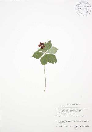 ( - BAR177)  @11 [ ] Copyright (2009) Steven Newmaster University of Guelph BIO Herbarium