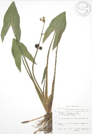 ( - BAR165)  @11 [ ] Copyright (2009) Unspecified University of Guelph BIO Herbarium