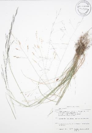 ( - BAR129)  @11 [ ] Copyright (2009) Steven Newmaster University of Guelph BIO Herbarium