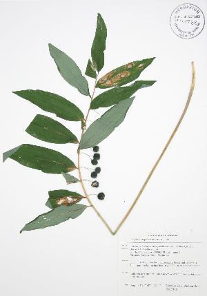 ( - BAR115)  @11 [ ] Copyright (2009) Unspecified University of Guelph BIO Herbarium