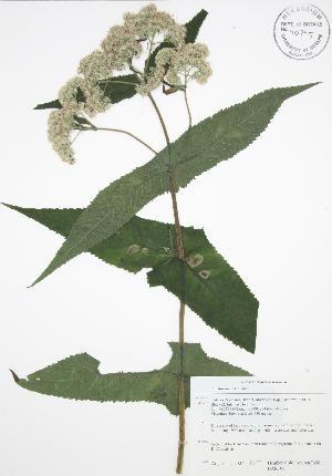 ( - BAR106)  @11 [ ] Copyright (2009) Unspecified University of Guelph BIO Herbarium