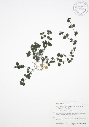 ( - BAR105)  @11 [ ] Copyright (2009) Steven Newmaster University of Guelph BIO Herbarium