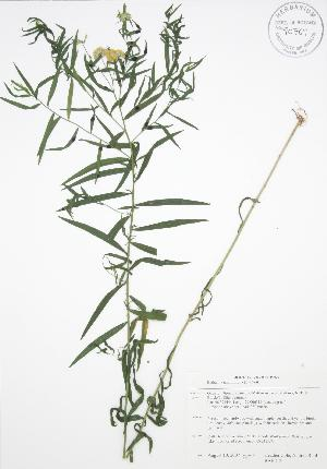 ( - BAR212)  @11 [ ] Copyright (2009) Steven Newmaster University of Guelph BIO Herbarium