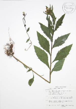( - BAR207)  @11 [ ] Copyright (2009) Unspecified University of Guelph BIO Herbarium
