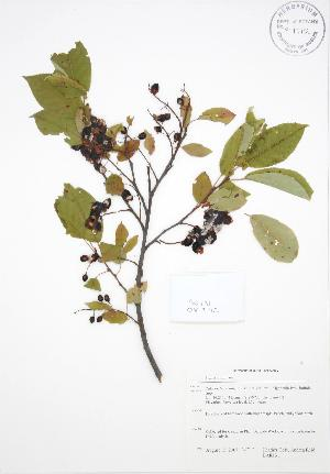 ( - BAR131)  @11 [ ] Copyright (2009) Steven Newmaster University of Guelph BIO Herbarium