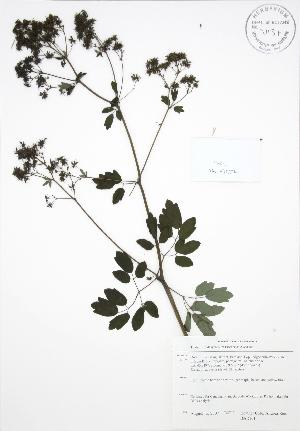 ( - BAR161)  @11 [ ] Copyright (2009) Steven Newmaster University of Guelph BIO Herbarium