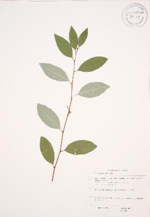( - JAG 0335)  @11 [ ] Copyright (2009) Steven Newmaster University of Guelph BIO Herbarium