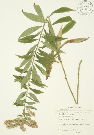 ( - JAG 0338)  @11 [ ] Copyright (2009) Steven Newmaster University of Guelph BIO Herbarium