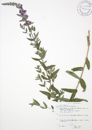 ( - JAG 0612)  @11 [ ] Copyright (2009) Steven Newmaster University of Guelph BIO Herbarium