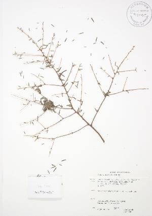 ( - JAG 0060)  @11 [ ] Copyright (2009) Steven Newmaster University of Guelph BIO Herbarium