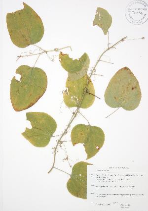 ( - JAG 0333)  @11 [ ] Copyright (2009) Steven Newmaster University of Guelph BIO Herbarium