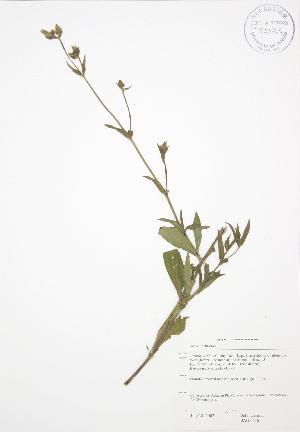 (Silene noctiflora - JAG 0656)  @11 [ ] Copyright (2009) Steven Newmaster University of Guelph BIO Herbarium