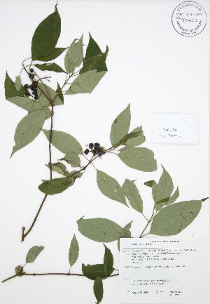 ( - JAG 0096)  @11 [ ] Copyright (2009) Steven Newmaster University of Guelph BIO Herbarium