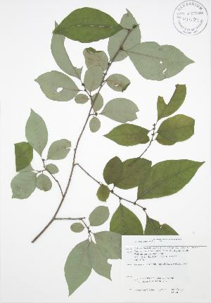 ( - JAG 0108)  @11 [ ] Copyright (2009) Steven Newmaster University of Guelph BIO Herbarium