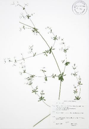 ( - JAG 0636)  @11 [ ] Copyright (2009) Steven Newmaster University of Guelph BIO Herbarium