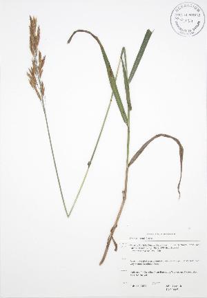 ( - JAG 0663)  @11 [ ] Copyright (2009) Steven Newmaster University of Guelph BIO Herbarium