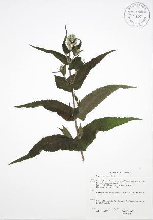 ( - JAG 0648)  @11 [ ] Copyright (2009) Steven Newmaster University of Guelph BIO Herbarium