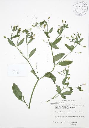 ( - JAG 0635)  @11 [ ] Copyright (2009) Steven Newmaster University of Guelph BIO Herbarium