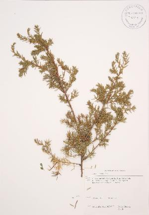 ( - RS149)  @11 [ ] Copyright (2009) Unspecified University of Guelph BIO Herbarium
