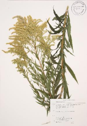 ( - AP240)  @11 [ ] Copyright (2009) Unspecified University of Guelph BIO Herbarium