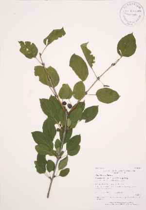 ( - AP296)  @11 [ ] Copyright (2009) Steven Newmaster University of Guelph BIO Herbarium