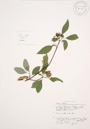 ( - AP231)  @11 [ ] Copyright (2009) Steven Newmaster University of Guelph BIO Herbarium