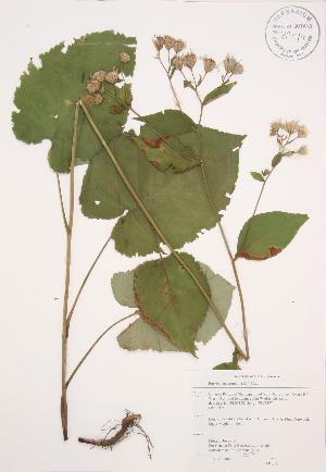 ( - AP273)  @11 [ ] Copyright (2009) Unspecified University of Guelph BIO Herbarium
