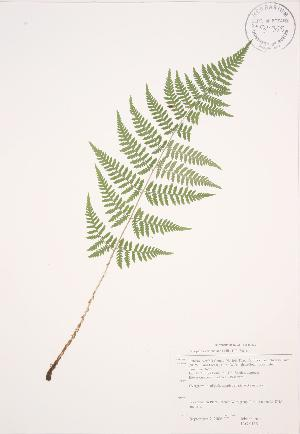 ( - JAG 0115)  @11 [ ] Copyright (2009) Steven Newmaster University of Guelph BIO Herbarium