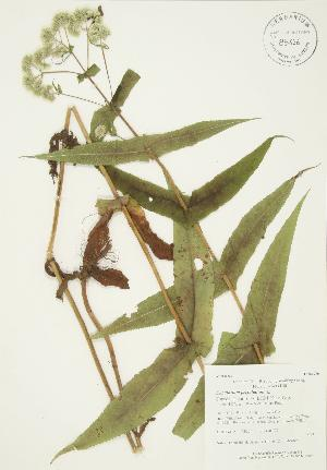 ( - AP254)  @11 [ ] Copyright (2009) Steven Newmaster University of Guelph BIO Herbarium