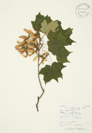 ( - AP268)  @11 [ ] Copyright (2009) Steven Newmaster University of Guelph BIO Herbarium