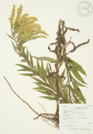 ( - AP395)  @11 [ ] Copyright (2009) Steven Newmaster University of Guelph BIO Herbarium