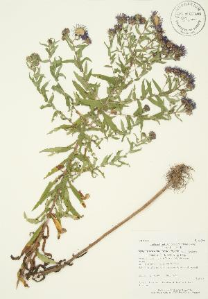 ( - AP401)  @11 [ ] Copyright (2009) Unspecified University of Guelph BIO Herbarium