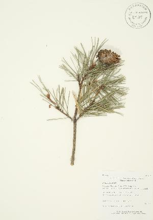 ( - AP414)  @11 [ ] Copyright (2009) Unspecified University of Guelph BIO Herbarium