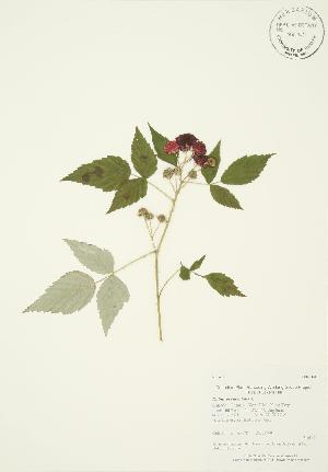 ( - AP178)  @11 [ ] Copyright (2009) Unspecified University of Guelph BIO Herbarium