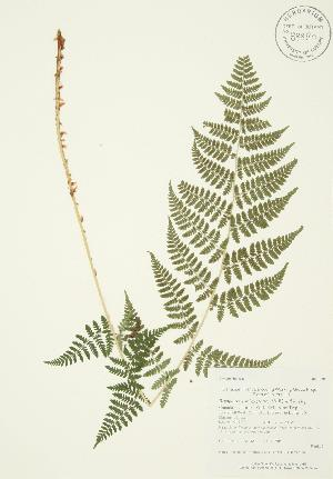 ( - AP188)  @11 [ ] Copyright (2009) Unspecified University of Guelph BIO Herbarium