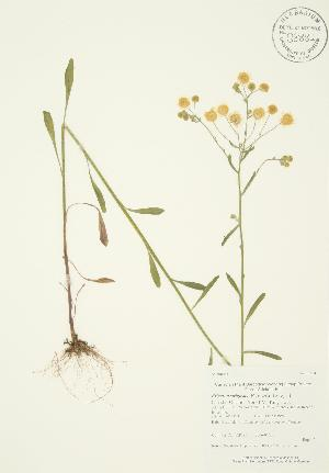 ( - AP195)  @11 [ ] Copyright (2009) Steven Newmaster University of Guelph BIO Herbarium