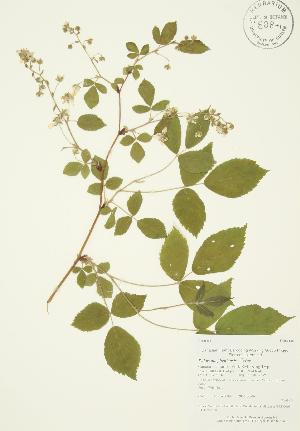 ( - AP084)  @11 [ ] Copyright (2009) Steven Newmaster University of Guelph BIO Herbarium
