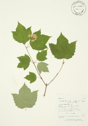 ( - AP102)  @11 [ ] Copyright (2009) Unspecified University of Guelph BIO Herbarium
