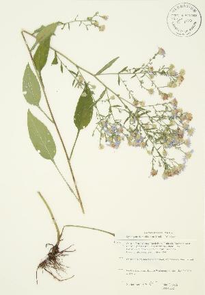 ( - JAG 0232)  @11 [ ] Copyright (2009) Steven Newmaster University of Guelph BIO Herbarium
