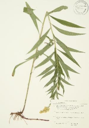 ( - JAG 0234)  @11 [ ] Copyright (2009) Steven Newmaster University of Guelph BIO Herbarium