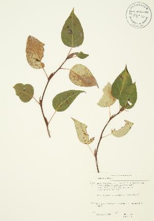 ( - JAG 0244)  @11 [ ] Copyright (2009) Steven Newmaster University of Guelph BIO Herbarium