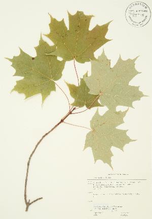 ( - JAG 0202)  @11 [ ] Copyright (2009) Steven Newmaster University of Guelph BIO Herbarium
